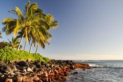 Palm trees at Lawai Beach - Poipu, Kauai, Hawaii, USA Stock Images