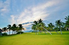 Palm trees on the lawn on a background. Of sky and sea Royalty Free Stock Photography
