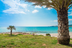 Palm trees by Le Bombarde shoreline Royalty Free Stock Photography