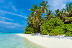 Palm trees leaning over sand beach, Maldives Stock Images
