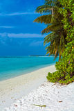 Palm trees leaning over sand beach, Maldives Royalty Free Stock Images