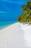 Palm trees leaning over sand beach, Maldives Stock Photo