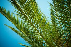 Palm trees leaves against the sky Royalty Free Stock Photos