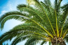 Palm trees leaves against the sky Stock Photography