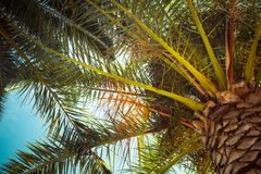 Palm trees leaves against the sky Royalty Free Stock Images