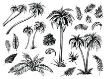 Palm trees and leaves. Black line silhouettes. Vector sketch illustration. Palm trees and leaves. Black line silhouette isolated on white background. Vector royalty free illustration