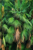 Palm trees leaves Stock Photography