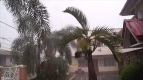 Palm trees and leaves sway during heavy downpour of rain stock footage