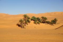 Palm trees in Libya Royalty Free Stock Images