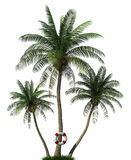 Palm trees and life  buoy Royalty Free Stock Images