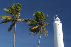 Palm Trees and Lighthouse. A white lighthouse aligned with two giant palm trees. Location: Praia do Forte, Bahia, Brazil royalty free stock photography