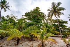 Palm trees, sand and Maldives stock photo
