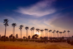 Palm trees line. Palm trees lighted by evening sun against sky with clouds Royalty Free Stock Image