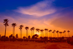 Palm trees line. Palm trees lighted by evening sun against sky with clouds Stock Image