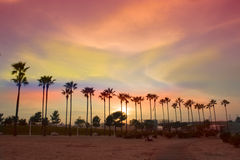 Palm trees line. Palm trees lighted by evening sun against sky with clouds Stock Images