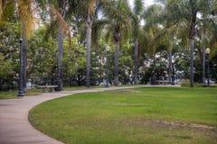 Palm Trees Line Pathway Stock Photo