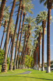 Palm trees line a walking path with sky Stock Photos