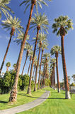 Palm trees line a walking path with sky Royalty Free Stock Photos