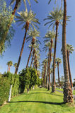 Palm trees line a walking path with sky Royalty Free Stock Image