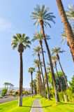 Palm trees line a walking path with sky Stock Images