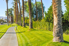 Palm trees line a walking path with sky Royalty Free Stock Photography