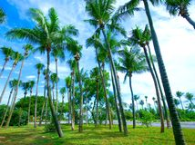 palm trees lining the beach front Royalty Free Stock Image