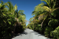 Palm trees lining beach road. A view of a road, lined with tall palm trees that leads to a beach Stock Image