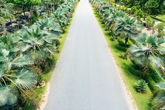 Palm trees lining beside the street Royalty Free Stock Photos