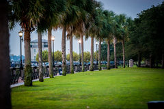 Palm Trees lining a walkway Royalty Free Stock Photo