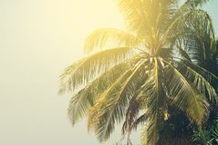 Palm Trees lit by the Sun on Tropical Beach. Toned  Background Royalty Free Stock Photo