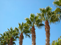 Palm trees located by diagonal Stock Photography