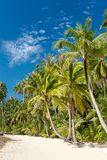 Palm trees on loneliness beach on island Koh Kood Stock Images