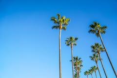Palm Trees at Long Beach Stock Image