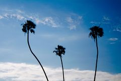 Palm Trees Long Beach California Stock Photos