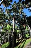 Palm trees at Loro Park Stock Image