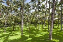 Palm trees in Loro Parque. Spain. Tenerife. Stock Photo