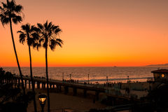 Palm trees at Los Angeles Beach. stock images