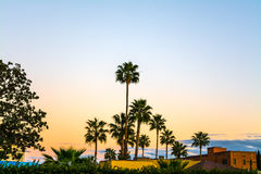Palm trees In Los Angeles at sunset. California Stock Image