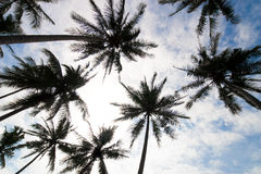 Palm trees low angle. Low angle photo of palm trees on the tropical beach Stock Images