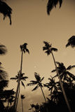 Palm trees from low angle Stock Images
