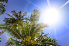Palm trees, low angle view against blue sky. Stock Image