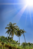 Palm trees, low angle view against blue sky. Stock Images