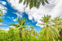 Free Palm Trees Low Angle View. Tropical Pattern Beach Stock Photo - 158906660
