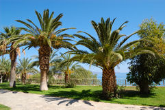 Palm trees at luxury hotel Royalty Free Stock Image