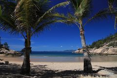 Palm trees on Magnetic Island, Queensland Royalty Free Stock Photography