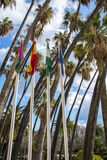 Palm trees in Malaga Royalty Free Stock Photos