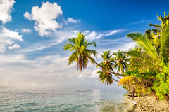 Palm trees on maldivian beach stock photo