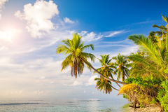 Palm trees on maldivian beach Royalty Free Stock Image