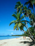 Palm Trees on Martinique Beach. West French Indies, Martinique Royalty Free Stock Photography