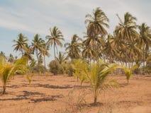Palm trees in Mazatlan Stock Photos